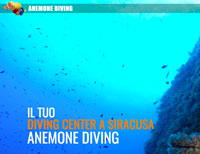 anemone diving center